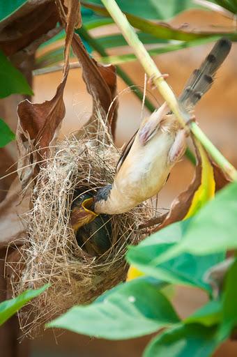 Birdies4